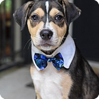 Adopt A Pet :: Furio - Baton Rouge, LA