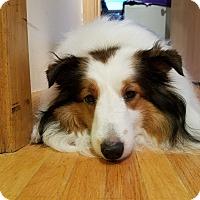 Adopt A Pet :: Corky - Circle Pines, MN