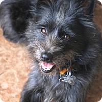 Adopt A Pet :: Sprinkles - Woonsocket, RI