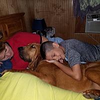 Adopt A Pet :: Gidget - Fayetteville, AR