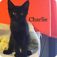 Adopt A Pet :: Kelly's Charlie - Yukon, OK