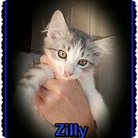 Adopt A Pet :: Zilly - Richmond, CA