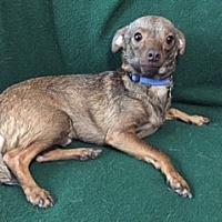 Adopt A Pet :: CARMELO - Corona, CA