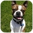 Photo 1 - Boston Terrier Dog for adoption in Temecula, California - Charlie