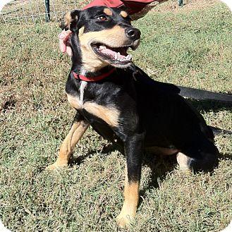 Doberman Pinscher Mix Dog for adoption in McCormick, South Carolina - Hope