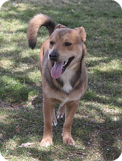 Corgi Mix Dog for adoption in Bend, Oregon - Charlie - Mr. Happy go Lucky!