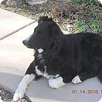 Adopt A Pet :: Moss - Denver, CO
