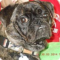 Adopt A Pet :: Ozzie - Hinckley, MN