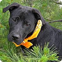 Adopt A Pet :: Rosco - Monteregie, QC