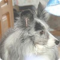 Adopt A Pet :: Ian - Circle Pines, MN