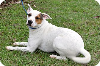Terrier (Unknown Type, Medium) Mix Dog for adoption in Madison, Florida - Max
