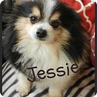 Adopt A Pet :: Jessie - Escondido, CA