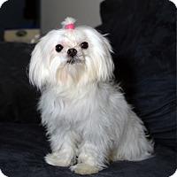Adopt A Pet :: Popcorn - Blairstown, NJ