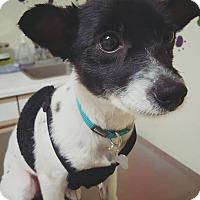 Adopt A Pet :: Lala - La Mirada, CA