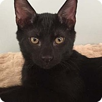 Adopt A Pet :: Ryder - Merrifield, VA