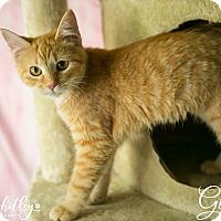 Adopt A Pet :: Ginny - Columbia, TN