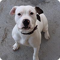 Adopt A Pet :: Penelope - Council Bluffs, IA