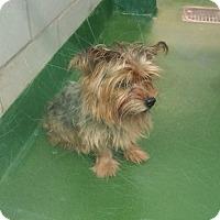 Adopt A Pet :: Cash - Rockwall, TX