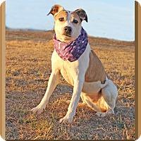Shepherd (Unknown Type)/Terrier (Unknown Type, Medium) Mix Dog for adoption in Hillsboro, Texas - Della