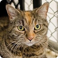 Adopt A Pet :: Liza - Greenwood, SC