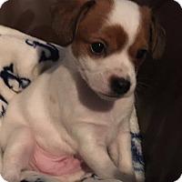Adopt A Pet :: Bullseye - Oakley, CA