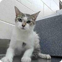 Adopt A Pet :: A381068 - Orlando, FL