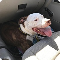 Adopt A Pet :: J.T. - Chico, CA