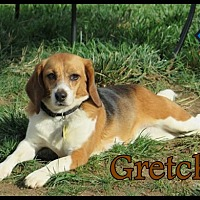Adopt A Pet :: Gretchen - Yardley, PA