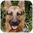 Photo 1 - German Shepherd Dog Dog for adoption in Los Angeles, California - Darcy von Hariton