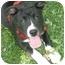 Photo 2 - Labrador Retriever Mix Puppy for adoption in Exeter, New Hampshire - Delta