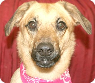 German Shepherd Dog Mix Dog for adoption in Cincinnati, Ohio - Vixen