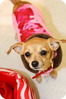 Chihuahua Mix Dog for adoption in Longview, Texas - Blondie