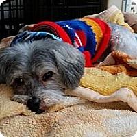 Adopt A Pet :: BJ - Santa Barbara, CA