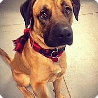 Adopt A Pet :: ISLAND - Grafton, OH