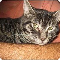 Adopt A Pet :: Rocky - Riverside, CA