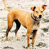 Adopt A Pet :: Ria - Scottsdale, AZ