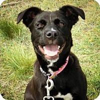 Adopt A Pet :: Carly - Cheyenne, WY