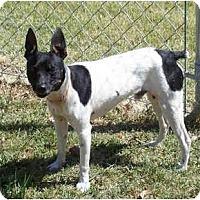 Adopt A Pet :: HOBO - Phoenix, AZ