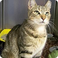 Adopt A Pet :: Gracie - Toledo, OH