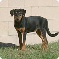 Adopt A Pet :: Hiccup - Lufkin, TX
