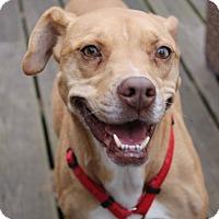 Adopt A Pet :: Cloverleaf - Greensboro, NC