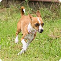 Adopt A Pet :: A - LENA - Seattle, WA