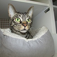 Adopt A Pet :: Tigger - Richmond, VA