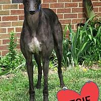 Adopt A Pet :: SARGENT MURPHY - Grandville, MI