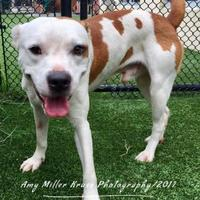 Adopt A Pet :: Sonny - Land O'Lakes, FL