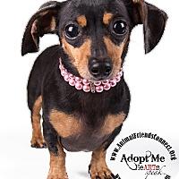 Adopt A Pet :: Hillary - Lodi, CA