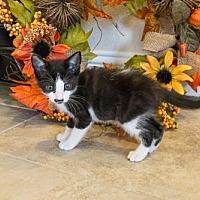 Adopt A Pet :: Rabbit - ROWLETT, TX