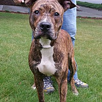 Adopt A Pet :: Aries - Lawrenceville, GA