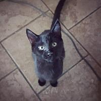 Adopt A Pet :: Titan - Taylorsville, IN