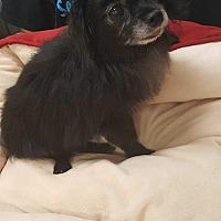 Adopt A Pet :: Joey - Rosamond, CA